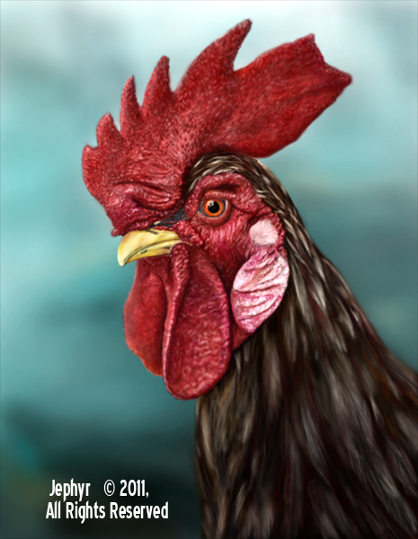 Image:  Copyright 2011, Jephyr (Jeff Curtis), All Rights Reserved. A Sketchbook Pro and Wacom Tablet Rooster Study