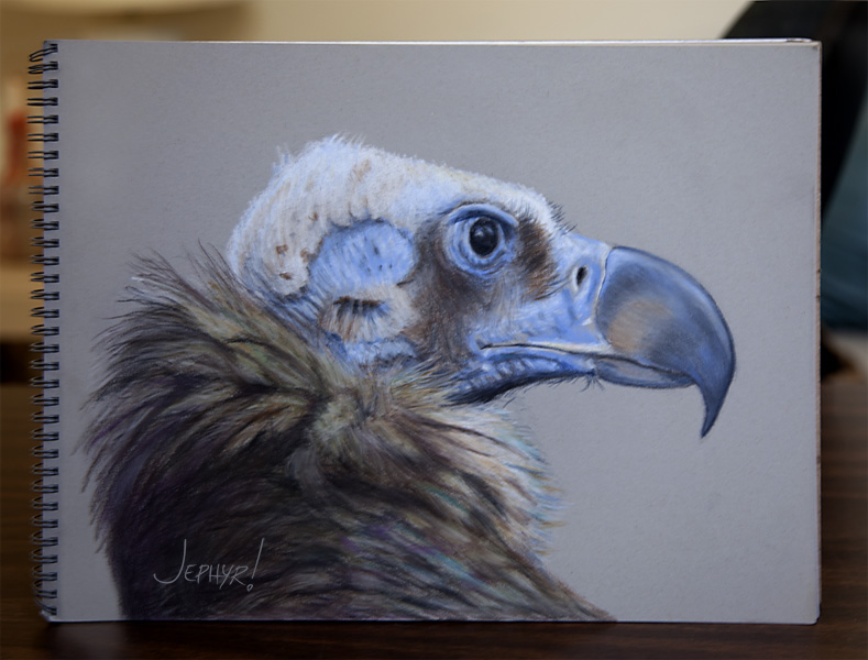 Cinereous Vulture - Pastel Pencil Photo Study - Copyright 2017, Jephyr (Jeff Curtis), All Rights Reserved