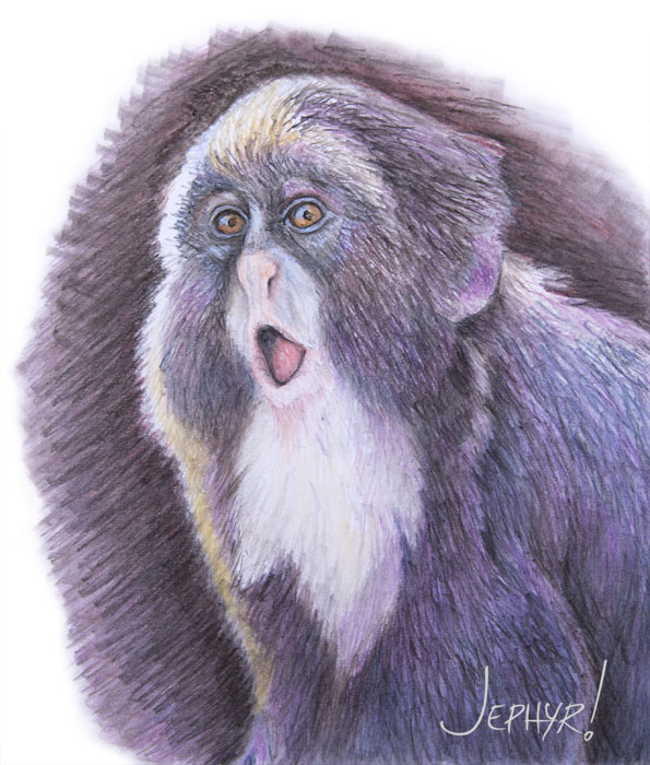 """Startled Monkey""- Pastel Pencil - Copyright 2018, Jephyr (Jeff Curtis), All Rights Reserved"