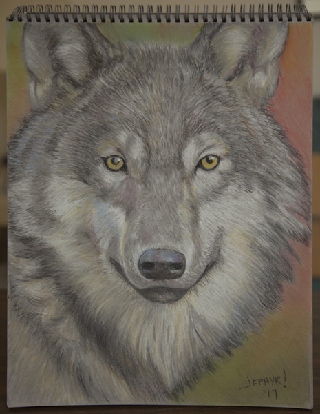 Wolf - Pastel Pencil Photo Study - Copyright 2017, Jephyr (Jeff Curtis), All Rights Reserved